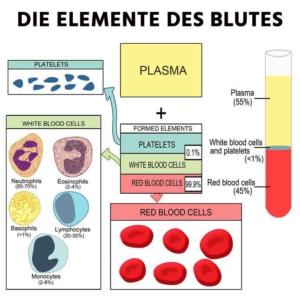 Blutelemente beim Blutbild