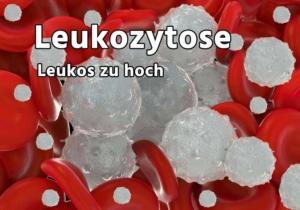 Leukozytose