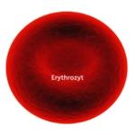 Rotes Blutkörperchen: Erythrozyt